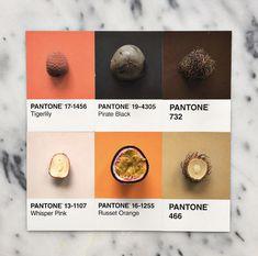 Image result for orange pantone fruit