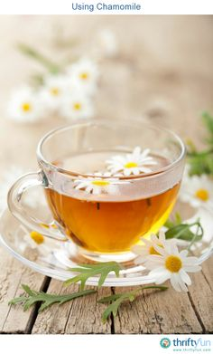 This is a guide about using chamomile. Chamomile is a versatile herb that can be used to treat minor aliments, as a soothing tea, and in homemade beauty products.