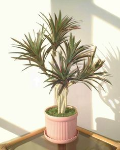 2ft Yucca Palm, Artificial Tree (WITHOUT POT) ** Read more reviews of the product by visiting the link on the image.