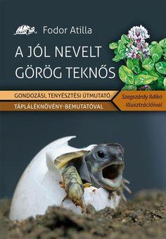 Görögteki.hu - A jól nevelt görög teknős