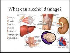 How Alcohol Effects the Internal Organs Badly