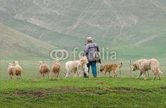 Pastore con cani e pecore a Castelluccio di Norcia (Umbria, Italy) - Sheep grazing © Pietro D'Antonio