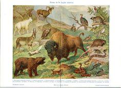 Animals of North America Print Nearctic Fauna by CarambasVintage, $16.00