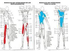 Gráfico de los músculos que intervienen en el futbolista