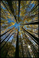 Forest in autumn color with sun through trees, Tennessee. Great Smoky Mountains National Park ( color)