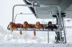 Lake Tahoe Ski Patrol! :)