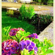 A corner of our garden