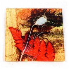 Gillian Arnold Furnished Grass  Glass Coaster