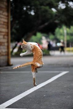 oops! too much catnip!