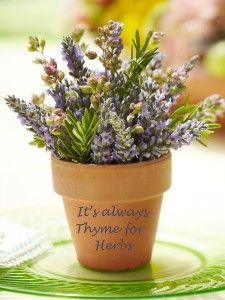 Thyme for Herbs In A Terra Cotta Pot