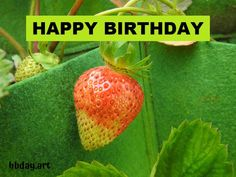 Happy Birthday Greeting Card, Strawberry, Strawberry Fruit, Strawberries, Strawberry Plant