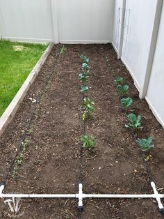 Ever wondered how to install a drip watering system for the garden? It is really easy to do and makes watering your garden so easy. Drip Watering System, Garden Watering System, Edible Garden, Easy Garden, Raised Garden Beds Irrigation, Box Photo, Drip Irrigation System, Drip System, Garden Sprinklers