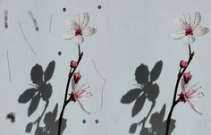 By using the spray paint to create a mess photo then by using the healing and cloning tool to clean away the mess on the flower with shadow photo.