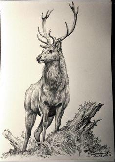 Unique Drawings, Cool Art Drawings, Art Drawings Sketches, Wildlife Paintings, Wildlife Art, Animal Sketches, Animal Drawings, Elk Drawing, Hunting Drawings