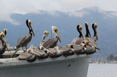 pest control tips for boaters #BoatUSMagazine