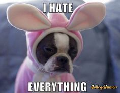 "Dog Hates Everything. ""But not this cute outfit though, right?"" - owner. cute, Words, Pranks, Animals, dogs, The Internet"