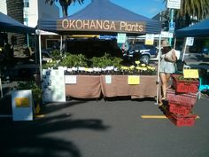 Tomato plants in Mt. Maunganui, New Zealand #FarmersMarket
