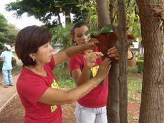 Como cultivar orquídea em árvore 5
