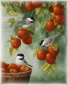 Bird Painting - Apple Harvest Chickadees Painting by Crista Forest - Bird Painting - Apple Harvest Chickadees Fine Art Prints and Posters for Sale Apple Painting, Painting & Drawing, Fine Art Amerika, Ouvrages D'art, Art And Illustration, Bird Pictures, Wall Pictures, Watercolor Bird, Bird Art