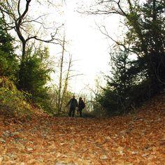 Fantasmes del bosc Country Roads, Photos