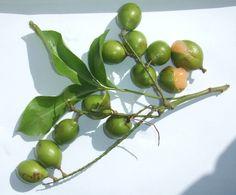 SPANISH LIME:  aunque parezca una lima, y tenga sabor a lima, no lo es. Es más como lichi, tampoco es española, ya que proviene de Centro y Sud América, y el Caribe.