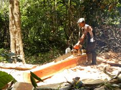 Building the Lodge; not one tree was cut. Every inch of the Amazon Refuge Lodge was constructed from naturally felled trees. Thanks mother nature.