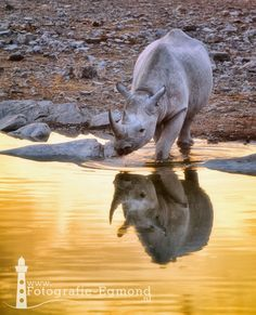 Black Rhino reflection by Fotografie-Egmond