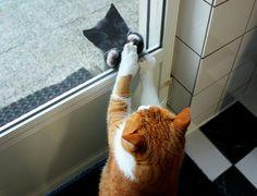 Lovely-KittyCats, gatinhamel: New neighbor (by ZoomLoes)