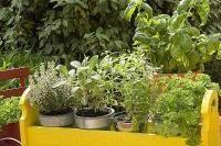 Légumes et potager - Composer une jardinière d'aromatiques