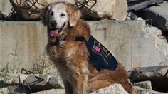 Bretagne, a 15-year-old retriever, is being honored for her work at Ground Zero.