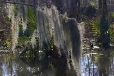 This supposedly-haunted New Orleans swamp, located near the west shore of Lake Ponchartrain, may look like any number of similar spots in South Louisiana, but legend has it that there are creepier things than just alligators hiding in the cypress trees.