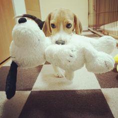 ***Snoopy lovin' time!