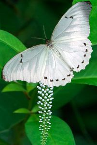 Beautiful Bugs, Beautiful Butterflies, You Give Me Butterflies, Me And My Dog, Moth Caterpillar, Ocean Creatures, Blessed Mother, Butterfly Wings, Amphibians