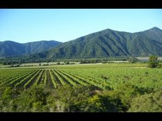 Romance en Verde - JOAKIN BELLO - - YouTube Bellisima, Chile, Vineyard, Romance, Youtube, Outdoor, Green, Romance Film, Outdoors