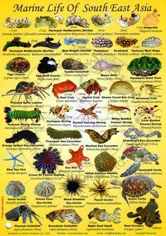 Green Island Diving, Taiwan Diving Vacation Animals Of The World, Animals And Pets, Fish Chart, Saltwater Aquarium Fish, Fauna Marina, Marine Ecosystem, Salt Water Fish, Types Of Fish, Marine Fish