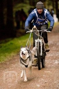 Get fit together...bikejoring is so much fun but you definitely need a helmet!