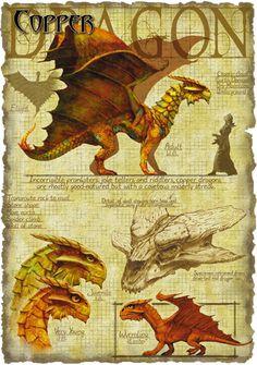 Copper dragon anatomy - Richard Sardinha
