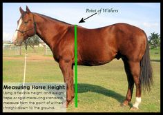 Horse Health: Why Horse Height and Weight Matter