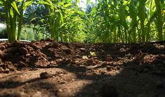 Got Water Problems? Build Healthy Soil  For Global Soil Week, it's important to recognize healthy soil's capacity to store excess carbon, and see it as a powerful ally in the fight for a stable climate.