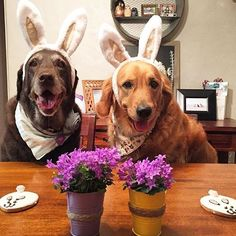 #fbf to Easter  #thedogbakery  Photo by @retrieversisters