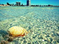Photo of the week: Crystal Clear at Siesta Key Beach. Florida offers refreshing ways to beat the heat, like swimming in clear Siesta Key beach water. Sarasota Florida, Florida Home, Tropical Beach Resorts, Siesta Key Beach, Beautiful Places To Live, Daytona Beach, Photos Of The Week, West Virginia, Health Benefits