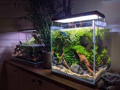 Finally a new home for my betta Betta Aquarium, Aquarium Setup, Live Aquarium Plants, Nano Aquarium, Aquarium Design, Planted Aquarium, Planted Betta Tank, Betta Fish Tank, Tropical Freshwater Fish