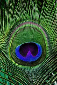 #PeacocksAreBeautiful Green Peacock Eye - peacock graphics from Mandarava.com