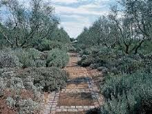 Image result for san liberato garden russell page