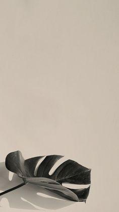 Iphone Wallpaper Travel, Sunflower Iphone Wallpaper, Wallpaper Nature Flowers, Plant Wallpaper, Mobile Wallpaper, Pastel Background Wallpapers, Iphone Background Wallpaper, Cute Wallpapers, Aesthetic Desktop Wallpaper