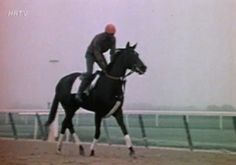The great filly Ruffian. She had the look of eagles, and even while out on a morning workout she seemed to dance and float above ground. Thoroughbred Horse, Breyer Horses, Run For The Roses, Sport Of Kings, Akhal Teke, All About Horses, Beautiful Horses, Pretty Horses, Racehorse
