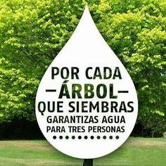 3x1 en agua plantando árboles, oportunidad única, NO TE LO PIERDAS! (promoción válida del dia de hoy y por toda tu vida, bases y condiciones en tu consciencia)
