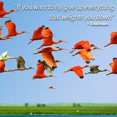 If you fly, give up everything that weights you down - Unknown.