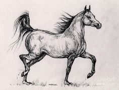 Horses Running | running Bay arabian horse Drawing - running Bay arabian horse Fine Art ...