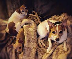 Saturday Night Snuggle #ELMAGT Lucy - Charo - Zahna